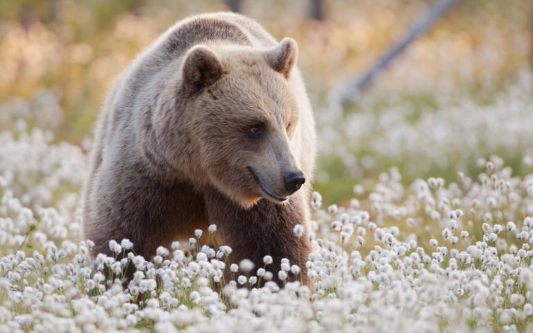Finnische Wildtiere im Seenland Saimaa
