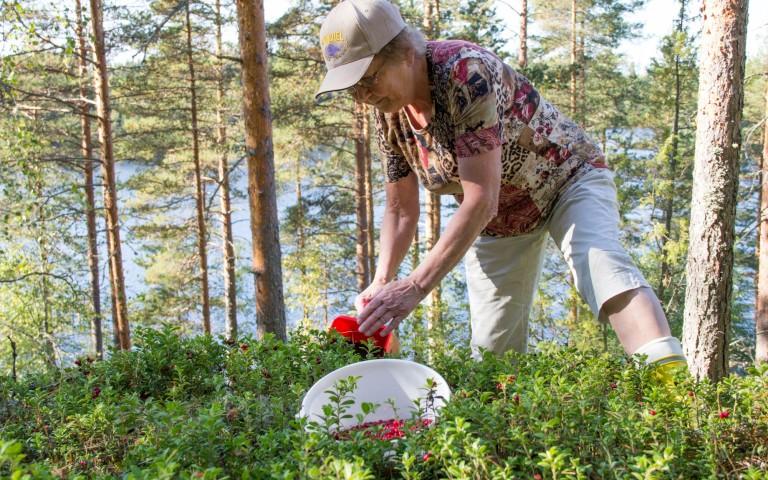 Finnland Verhalten in der Natur
